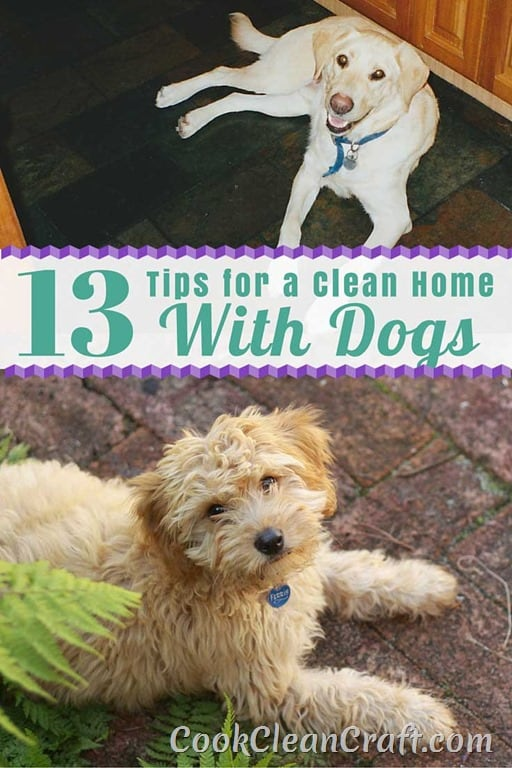 13 Tips For A Clean Home With Dogs Cook Clean Craft