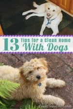 13 Tips for a Clean Home with Dogs